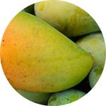 Mangue Verte